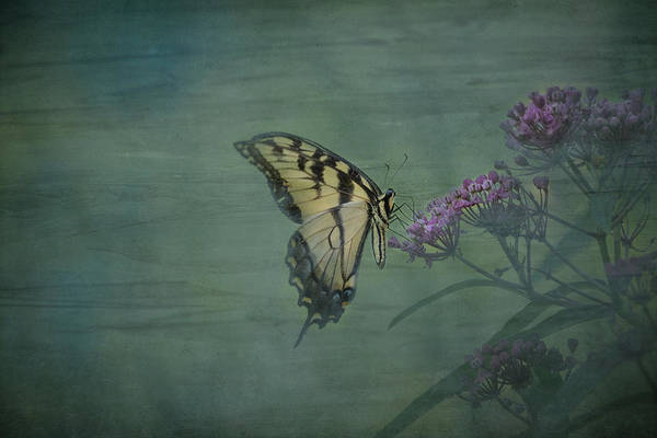 Wall Art - Photograph - Artistic Eastern Tiger Swallowtail 2017-1 by Thomas Young