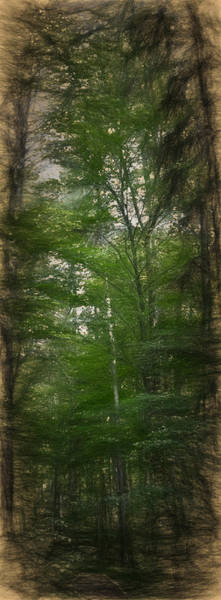 Photograph - Artistic High Trees  by Leif Sohlman