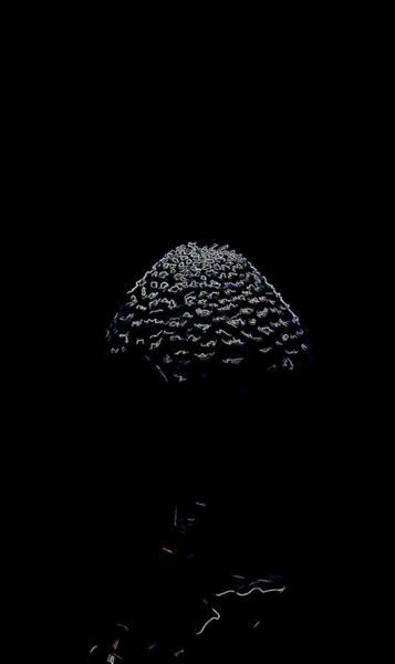 Photograph - Artistic Parasol Mushroom 3 by Leif Sohlman