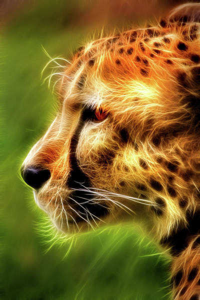 Photograph - Artistic Profile Of A Cheetah by Don Johnson