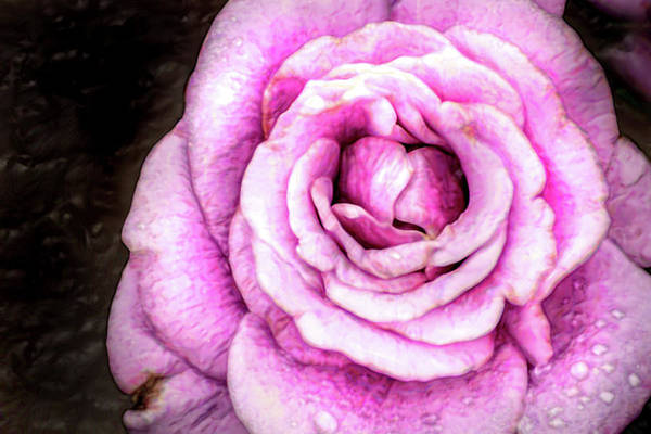 Photograph - Artistic Purple Rose by Don Johnson