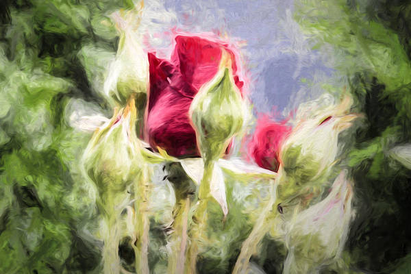 Photograph - Artistic Rose And Buds by Leif Sohlman