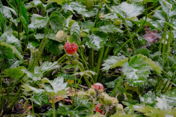 Photograph - Artistic Strawberries In Rain by Leif Sohlman