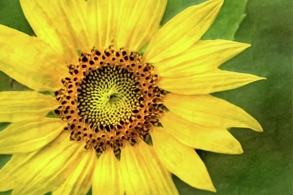 Photograph - Artistic Summer Sunflower by Don Johnson
