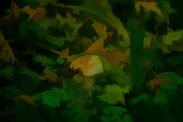 Photograph - Artistic White Fungi by Leif Sohlman