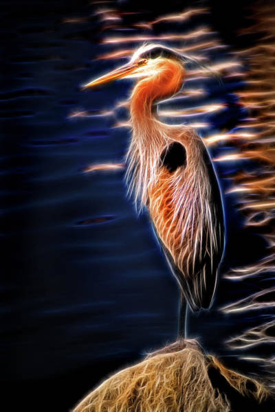 Photograph - Artisticc Great Blue Heron by Don Johnson