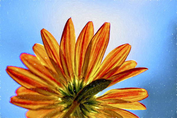 Photograph - Peekaboo Chrysanthemum by Kay Brewer