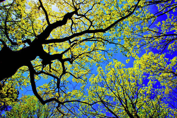 Photograph - Artsy Tree Canopy Series, Early Spring - # 01 by The American Shutterbug Society