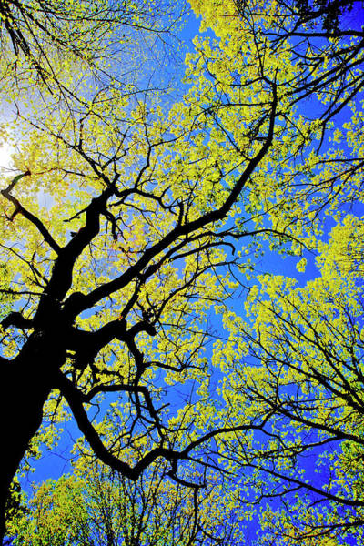 Photograph - Artsy Tree Canopy Series, Early Spring - # 02 by The American Shutterbug Society