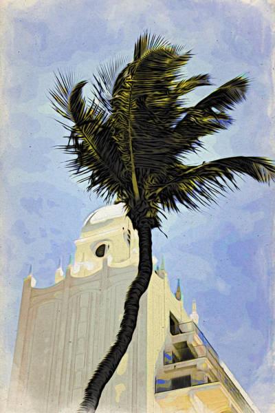 Photograph - Aruba Palm by Alice Gipson