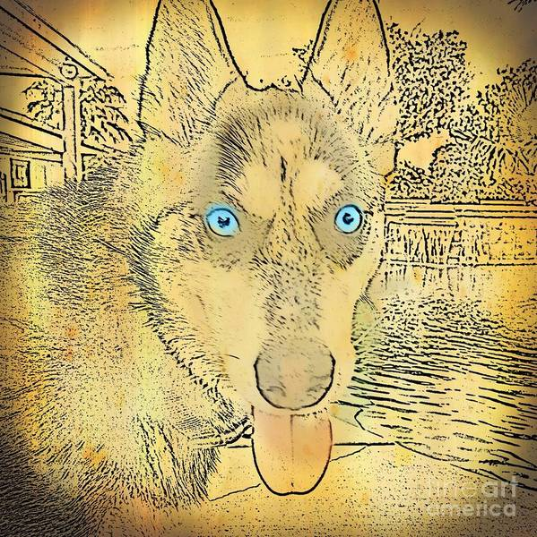 Husky Mixed Media - Arya by Kay Shackleton