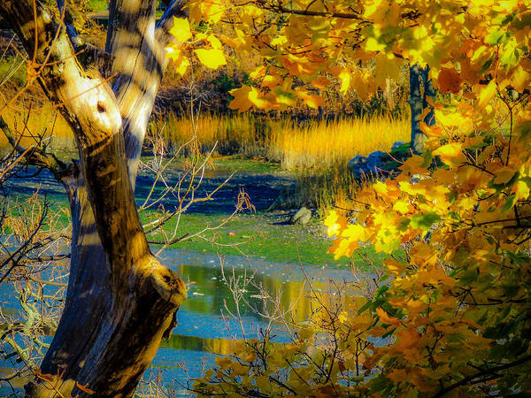 Photograph - As Fall Leaves by Glenn Feron