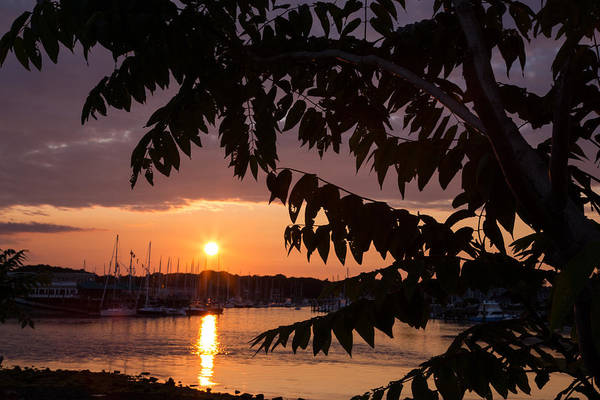 Silhoutte Photograph - As It Sets Over The Harbor by Karol Livote