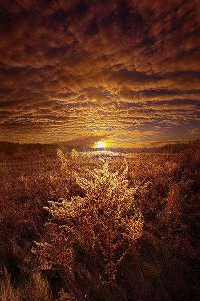 Photograph - As It Was In The Beginning by Phil Koch