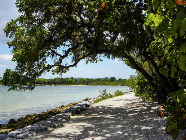 Florida Wall Art - Photograph - As Much As It Can by Ric Schafer