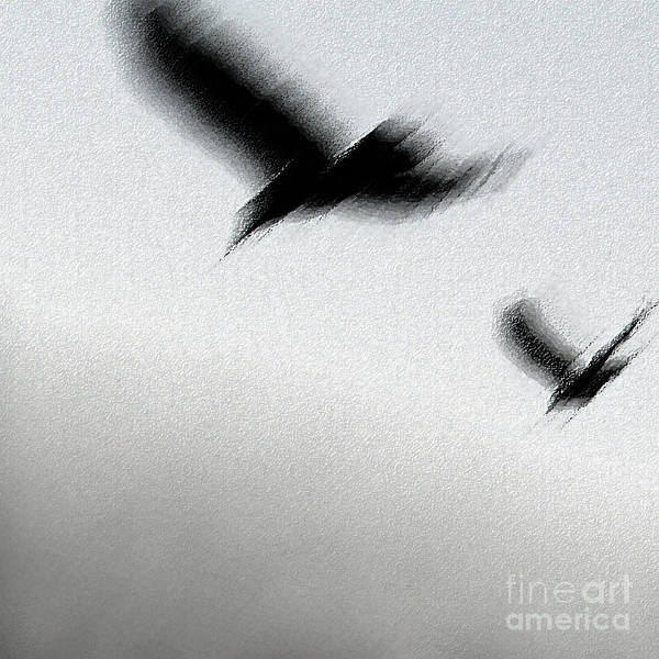 Photograph - As The Crow Fly by Linda Shafer