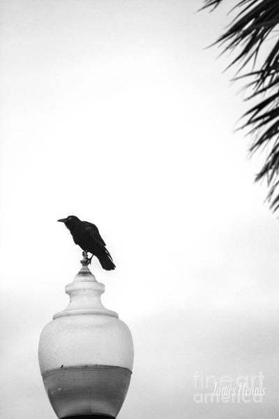 Photograph - As The Crow Lands by James Hennis