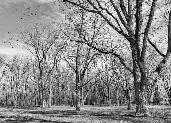Photograph - As Winter Nears by Susan Warren