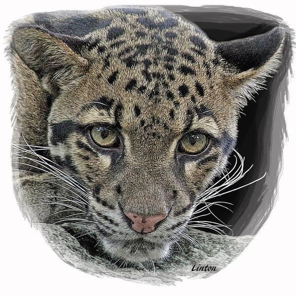Digital Art - Asian Cloud Leopard by Larry Linton