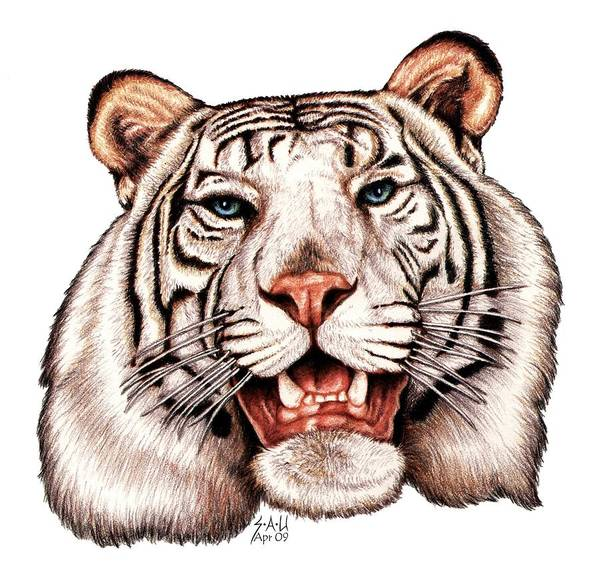 White Tiger Drawing - Asian King by Sheryl Unwin