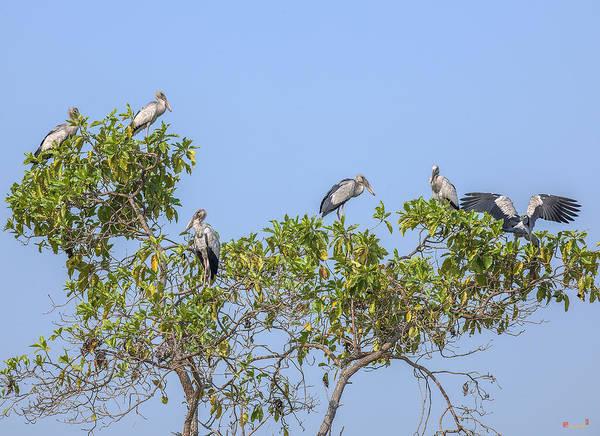 Photograph - Asian Openbill Storks Dthn0205 by Gerry Gantt