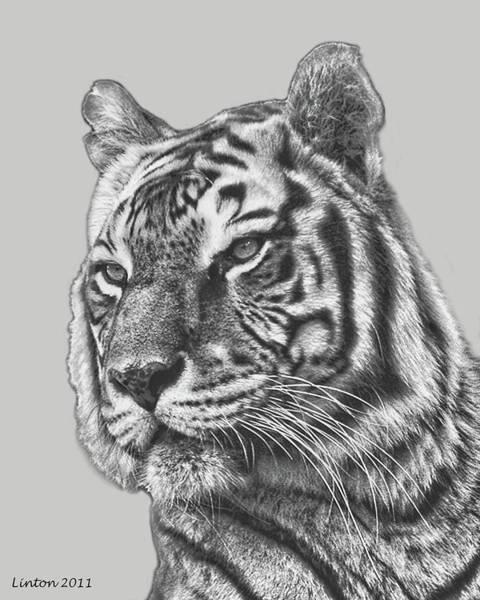 Digital Art - Asian Tiger 2 by Larry Linton
