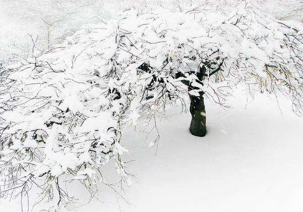 Wall Art - Photograph - Asian Winter by Jessica Jenney