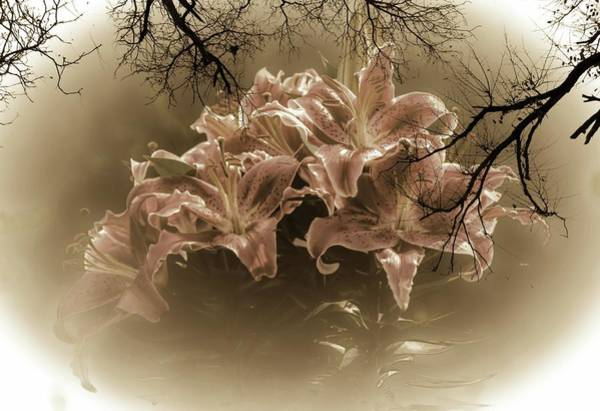 Wall Art - Photograph - Asiatic Lilies In Sepia by Sherman Perry