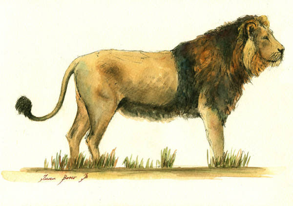 Wall Art - Painting - Asiatic Lion by Juan Bosco