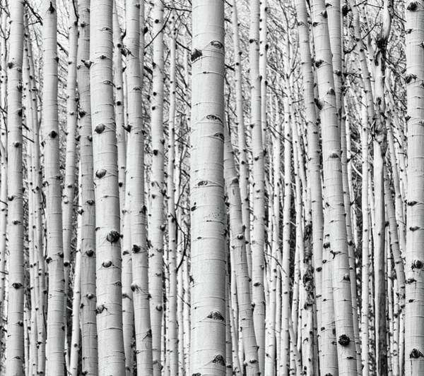 Photograph - Aspen 1 by Rand