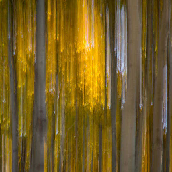 Photograph - Aspen Abstract by James Woody