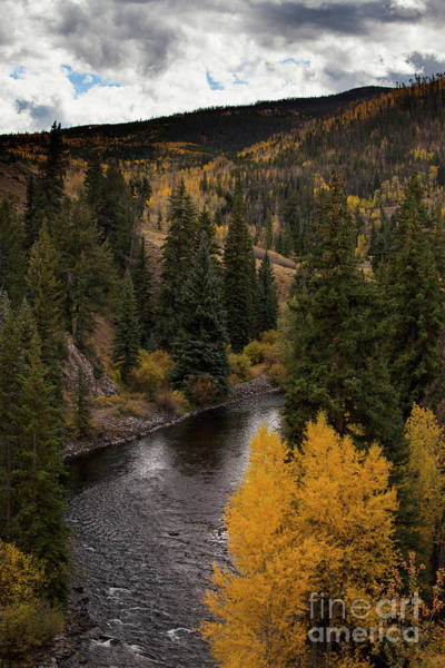 Wall Art - Photograph - Aspen And Creek by Timothy Johnson