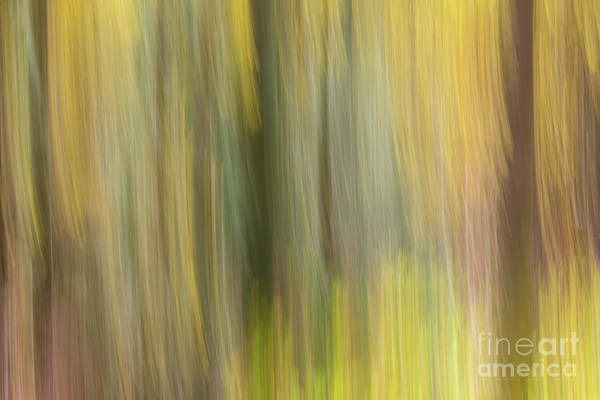 Photograph - Aspen Blur #2 by Vincent Bonafede