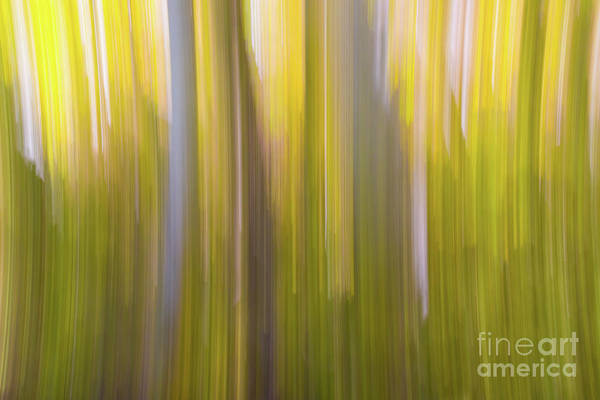 Photograph - Aspen Blur #6 by Vincent Bonafede