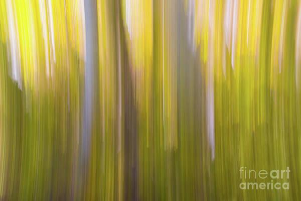 Photograph - Aspen Blur #6 by Vincent Bonafede