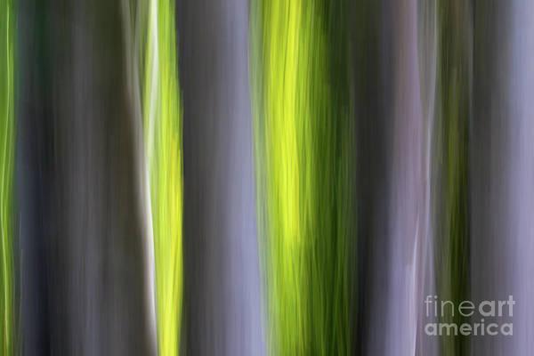 Photograph - Aspen Blur #7 by Vincent Bonafede