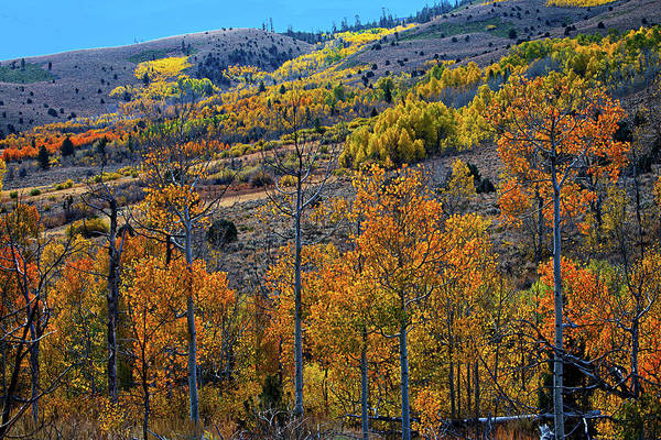 Photograph - Aspen Cascades In The Sierra by Lynn Bauer