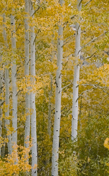 Wall Art - Photograph - Aspen Cathedral by Alpha Pup
