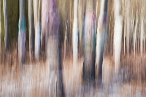 Photograph - Aspen Cluster by Michael Blanchette