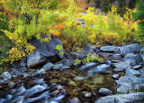 Photograph - Aspen Creek by Anthony Michael Bonafede