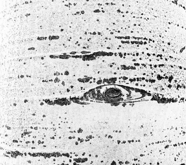 Photograph - Aspen Eye by David Waldrop