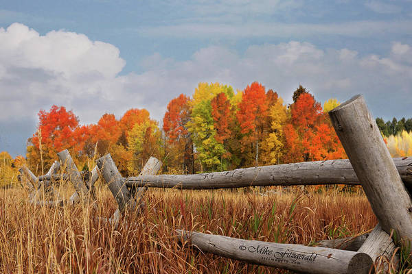 Photograph - Aspen Fall Colors by Mike Fitzgerald