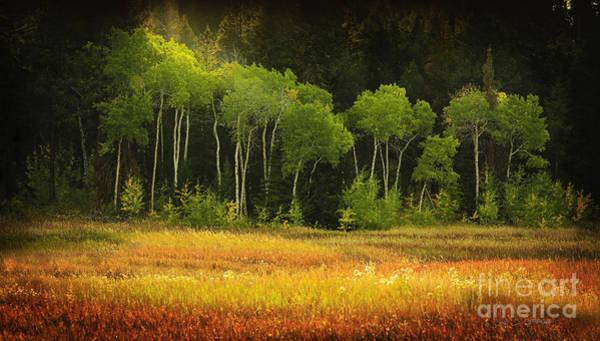Photograph - Aspen Grove by Craig J Satterlee