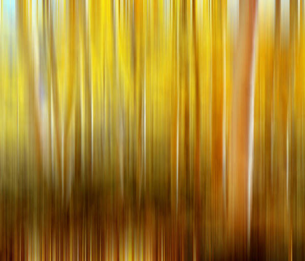 Photograph - Aspen Grove Digital Abstracts Motion Blur by Rich Franco
