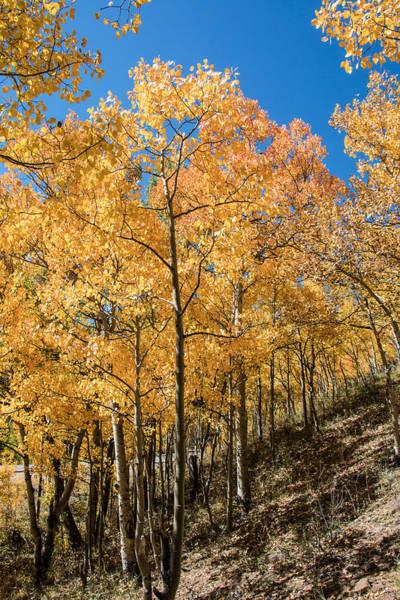 Wall Art - Photograph - Aspen Hillside by Dawn Key