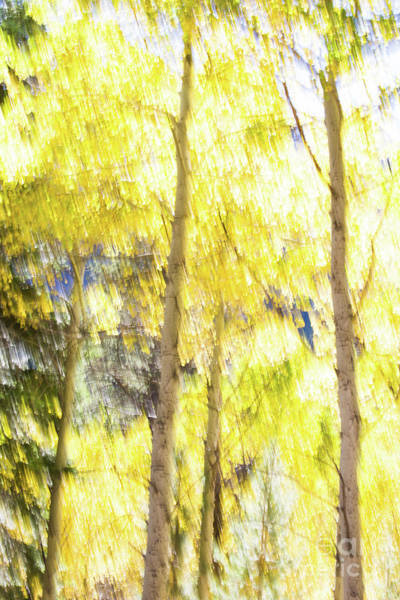 Photograph - Aspen Impressions by Anthony Bonafede