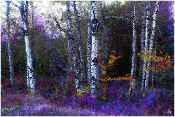 Photograph - Aspen In Purple And Blue  by Wayne King