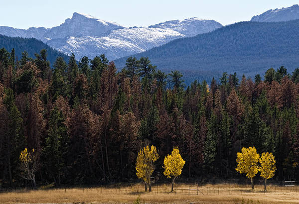 Photograph - Aspen In The Colorado Rockies by Dave Dilli