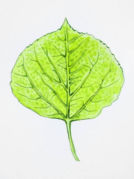 Painting - Aspen Leaf - Green by Aaron Spong