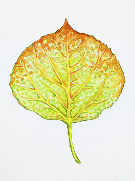 Painting - Aspen Leaf - Green And Orange by Aaron Spong